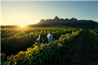 Two friends walking in a vineyard with their guid...
