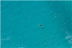 Drone shot of a surfer surrounded by crystal blue...