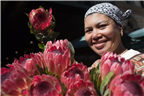 Woman selling proteas at the Cape Town flower mar...