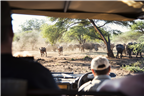 A herd of buffalo and white rhino seen from a gam...