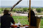 Couple taking photograph of elephants at a wateri...