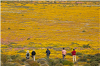 Group of tourists admiring the view Namaqualand d...