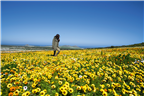 Woman walking through a field of flowers in the W...