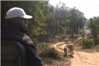 Wildlife Safari - Game drive